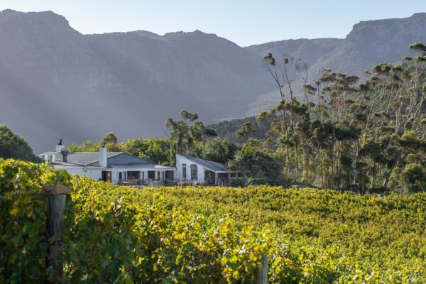 Harvest Tour at Silvermist Organic Wine Estate