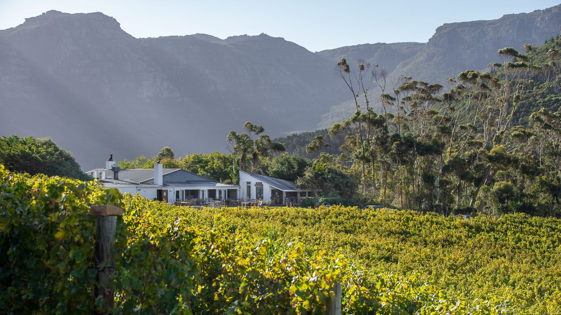 You are currently viewing Harvest Tour at Silvermist Organic Wine Estate